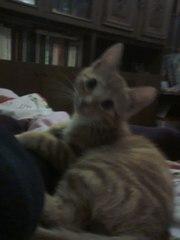 отдам кота в хорошие руки)